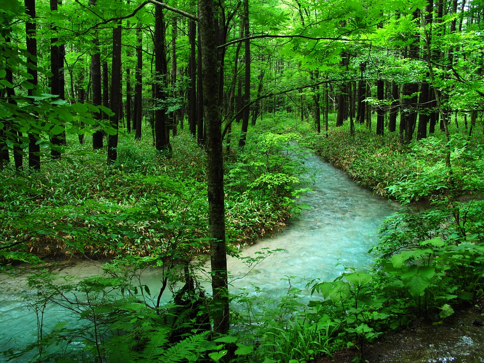Shinrin-yoku aka forest bathing